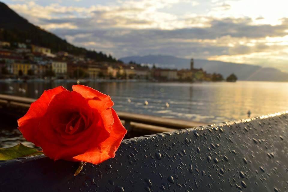 la sorgente del fiore rosso